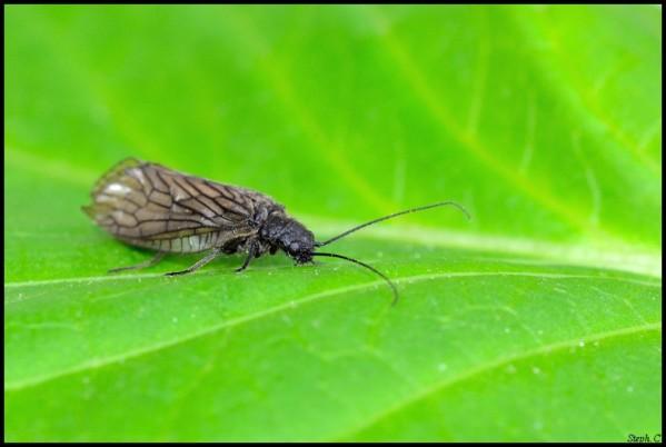 Macrophotographie-Insecte-5364-border.jpg