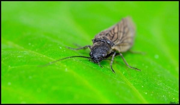 Macrophotographie-Insecte-5365-border.jpg