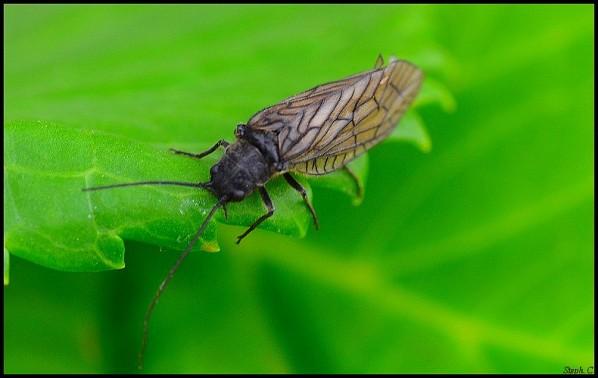 Macrophotographie-Insecte-5372-border.jpg