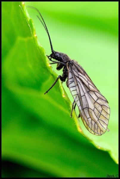 Macrophotographie-Insecte-5377-border.jpg